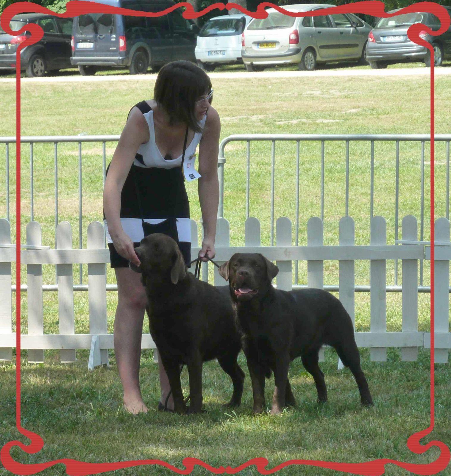 Exposition canine de Jonzac (2)