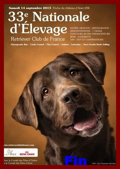 33ème Nationale d'Elevage Retrievers à Anet.