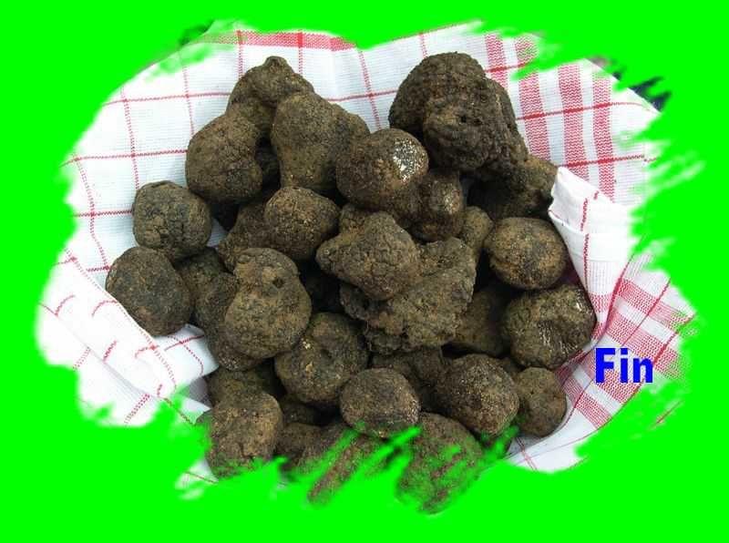 Recherche de truffes à la Charmille.