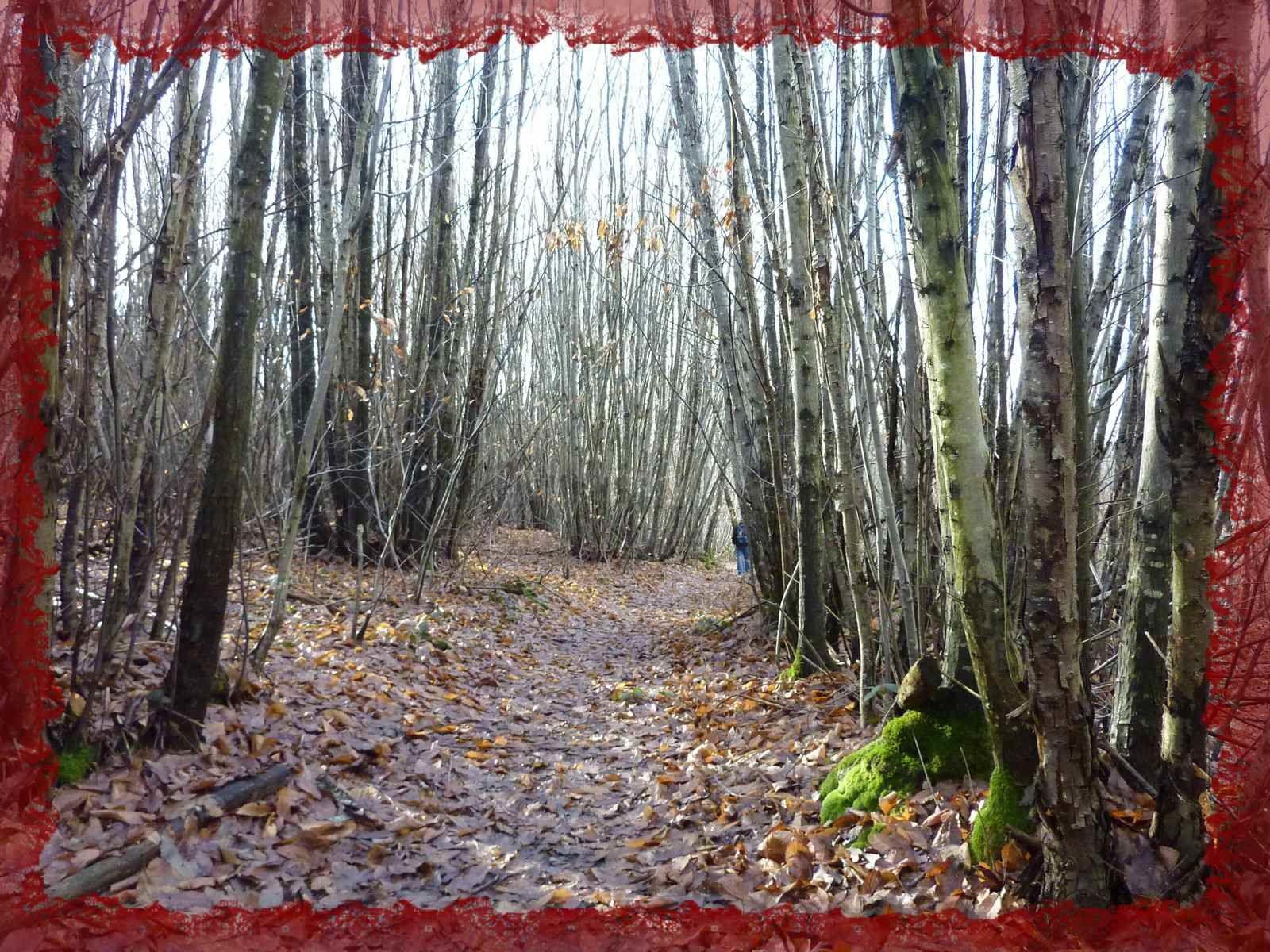 Sentier de découverte de Dignac.