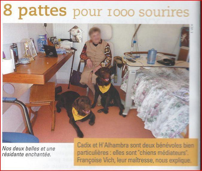 Les labradors médiateurs charentais s'invitent dans le Pas de Calais.