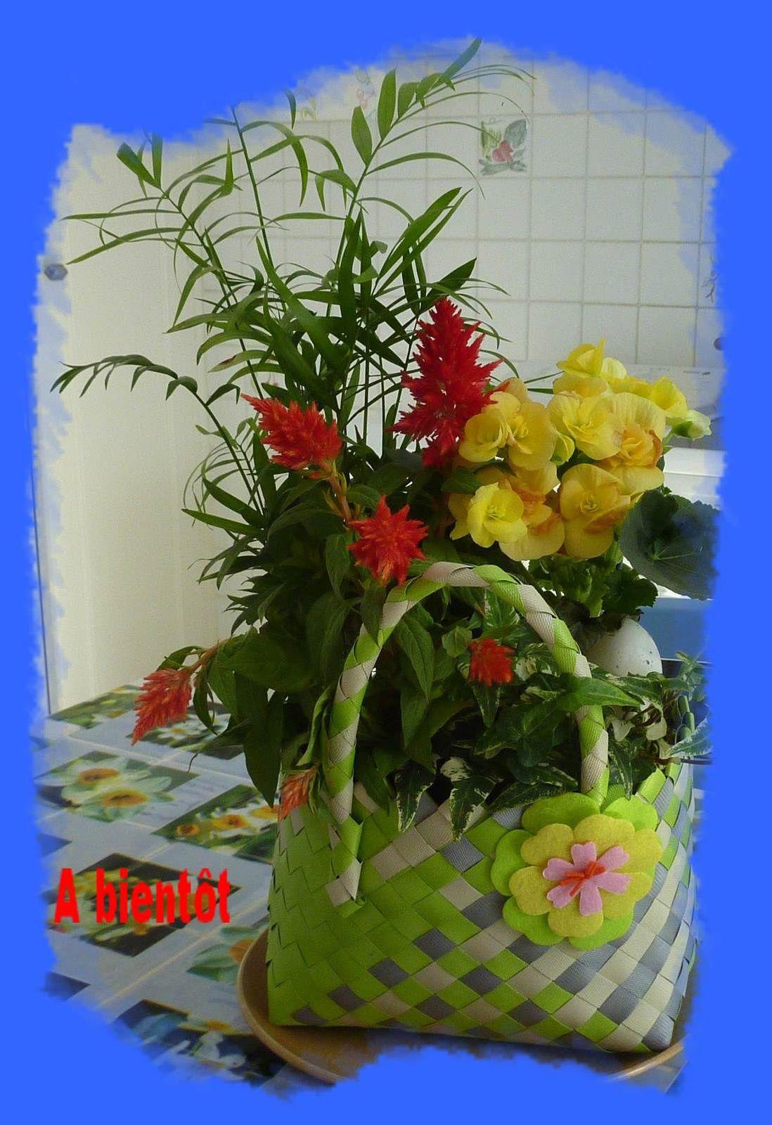 Fleurs du jardin.
