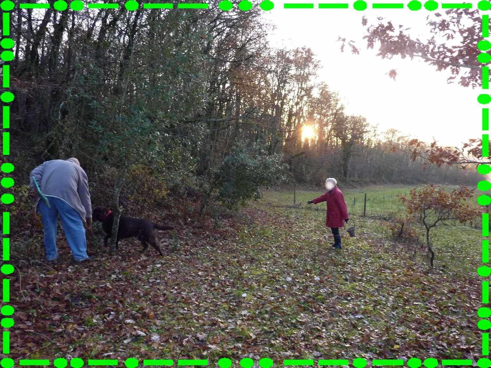 Récolte de truffes près de Jarnac.