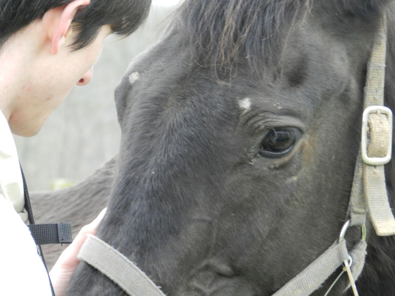 Echange de regards avec un cheval - copyright : techniques d'élevage