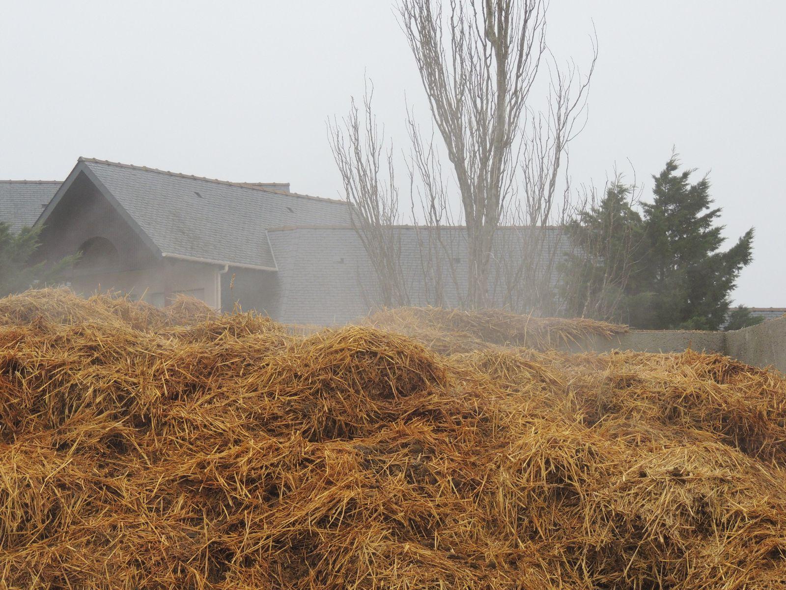 Tas de fumier qui fume en hiver. Techniques d'élevage. Nantes. Image soumise à droits d'auteur.