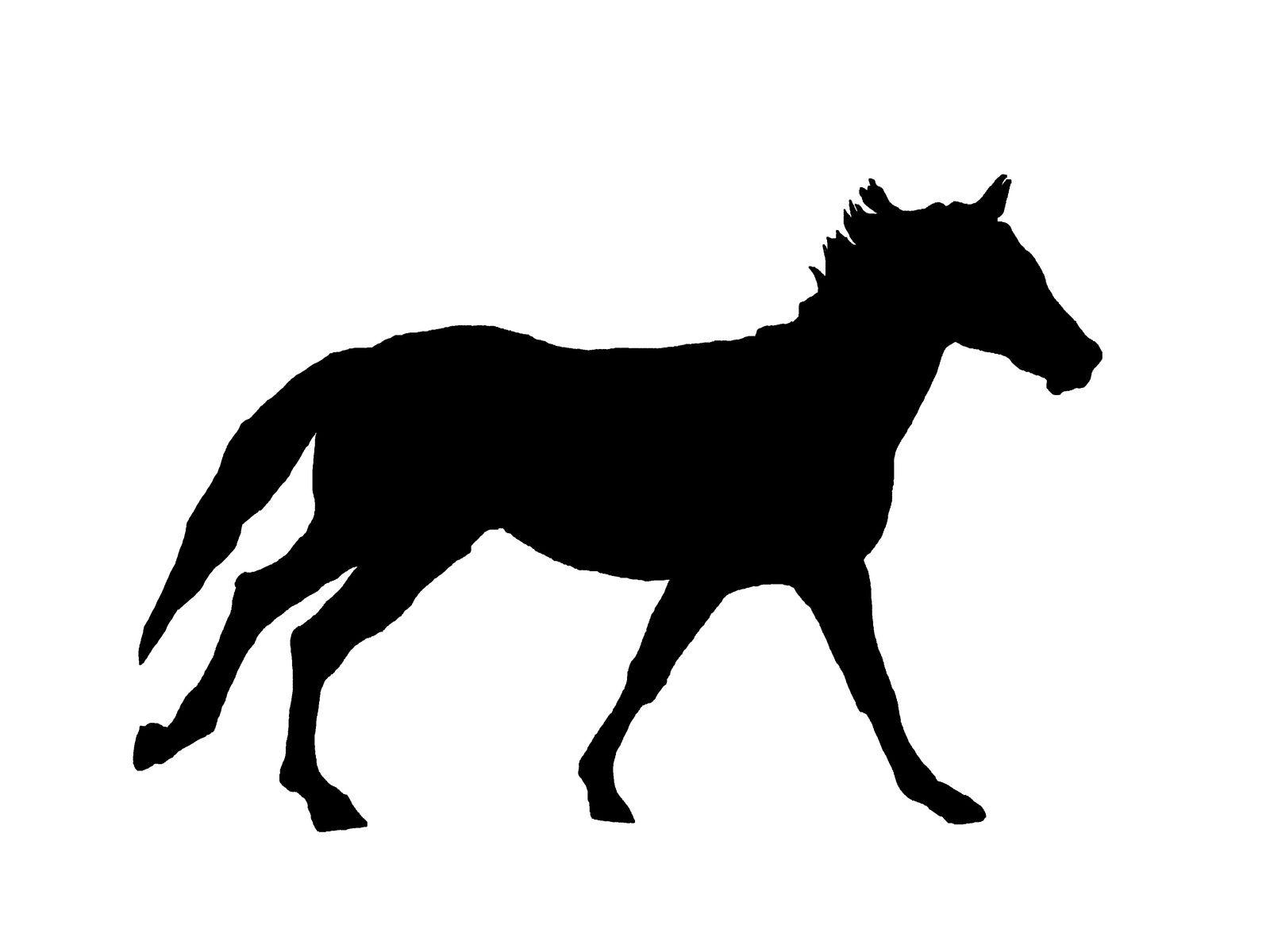 Ombre d'un cheval. Image soumise à droits d'auteurs. Techniques d'élevage 2014