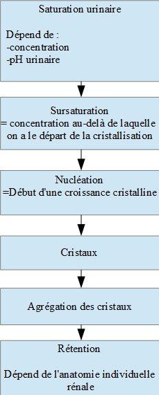 Mode de constitution des calculs rénaux. Copyright François Kaeffer. Techniques d'élevage. Nantes