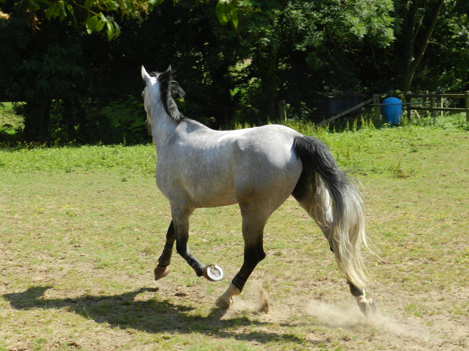 Cheval au pré. Techniques d'élevage Nantes 2014. Image soumise à droits d'auteur.