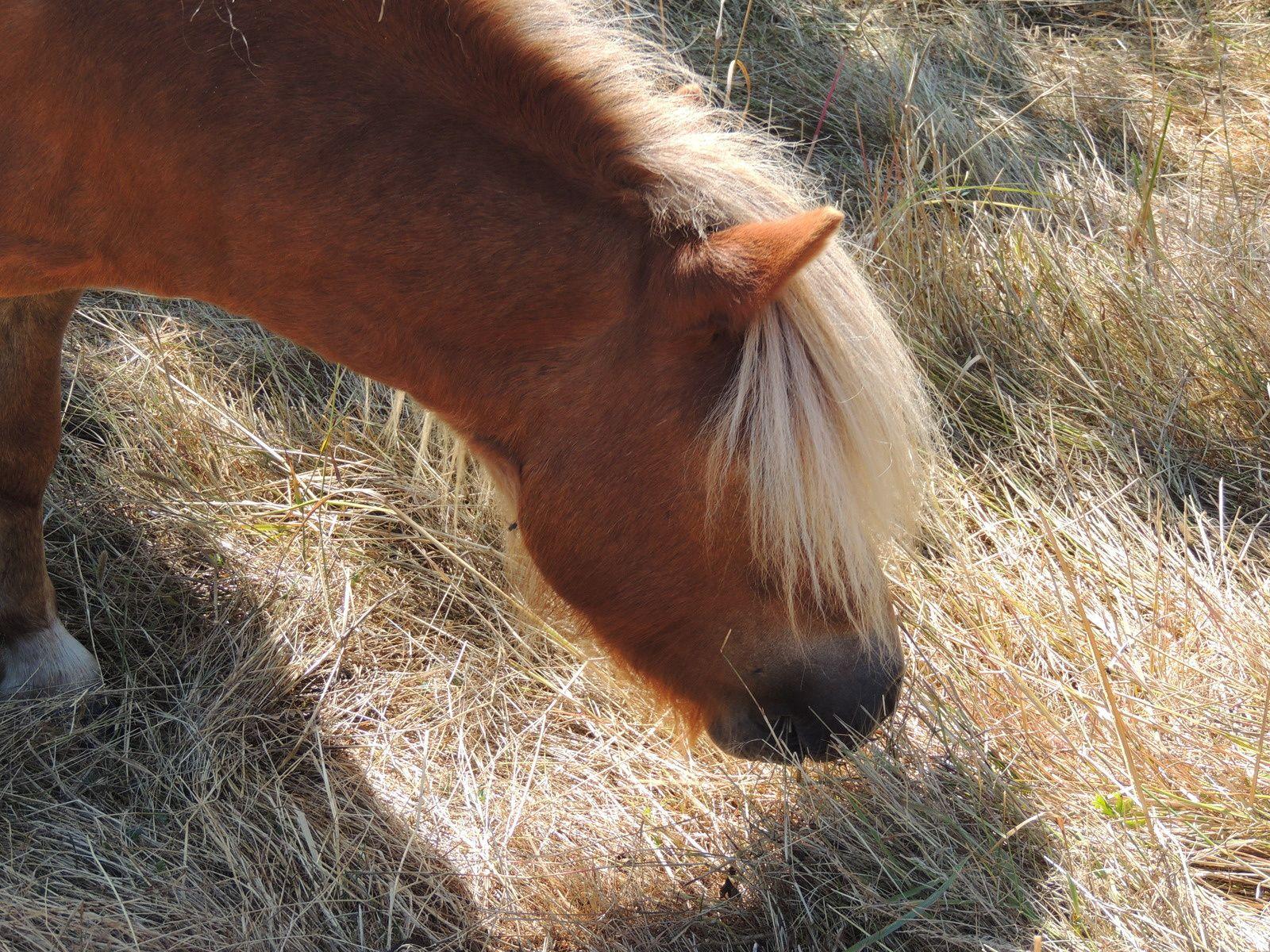 Poney à l'herbe. Techniques d'élevage. Tous droits réservés.