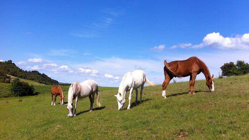 Journée Nutrition Equine organisée par le Domaine de Perry et l'équipe de Techniques d'élevage