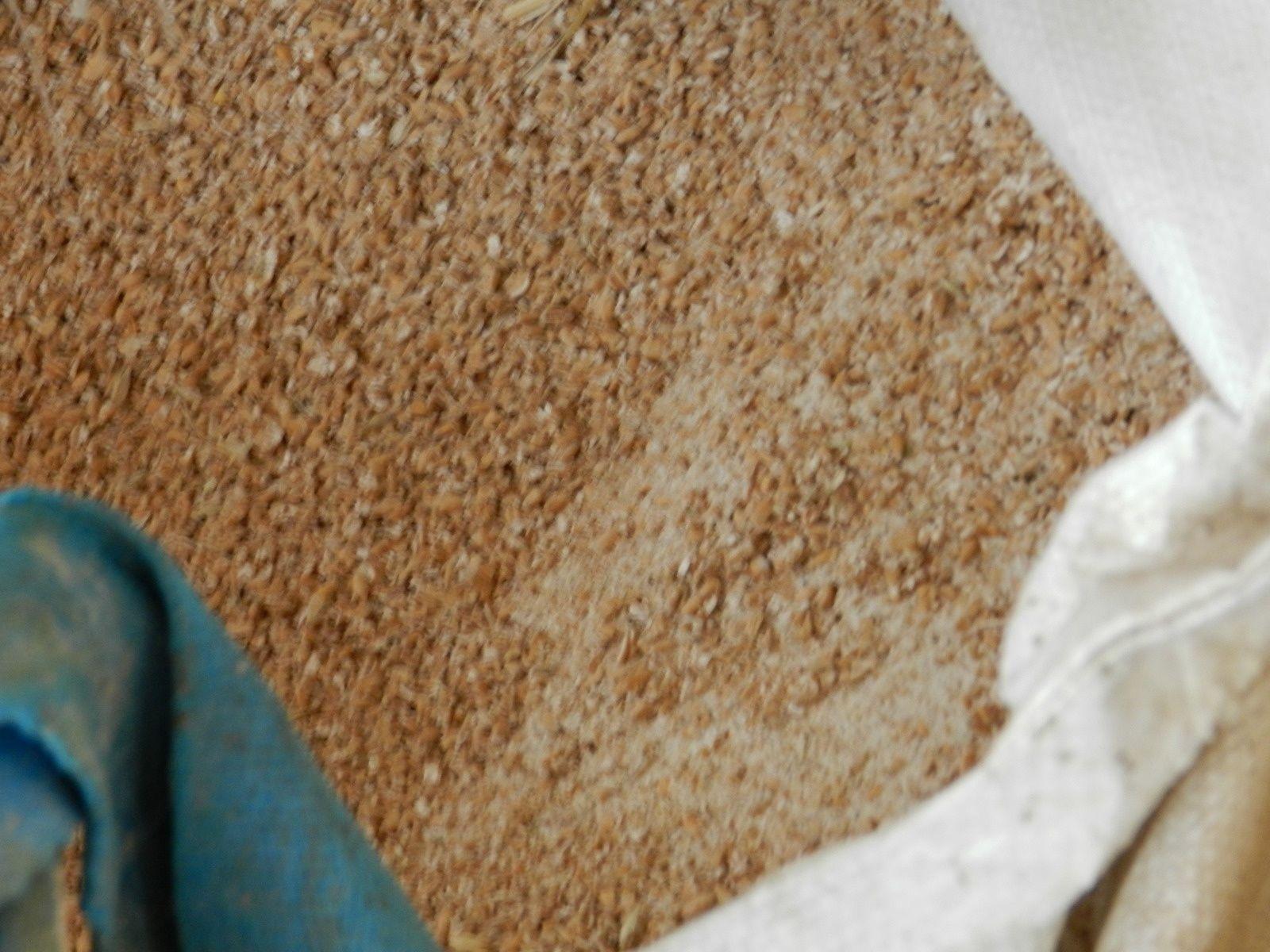 Céréale broyée. Techniques d'élevage. Tous droits réservés