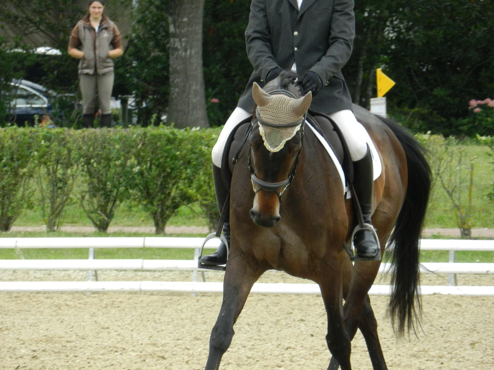 Jeune cheval en dressage. Technique d'élevage. Tous droits réservés
