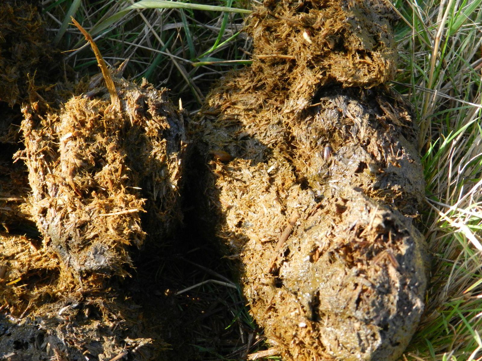 L'indigestible se retrouve dans les crottins. Techniques d'élevage. Tous droits réservés