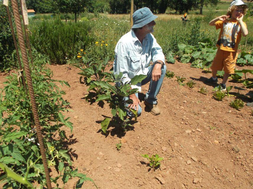 La plantation des endives...