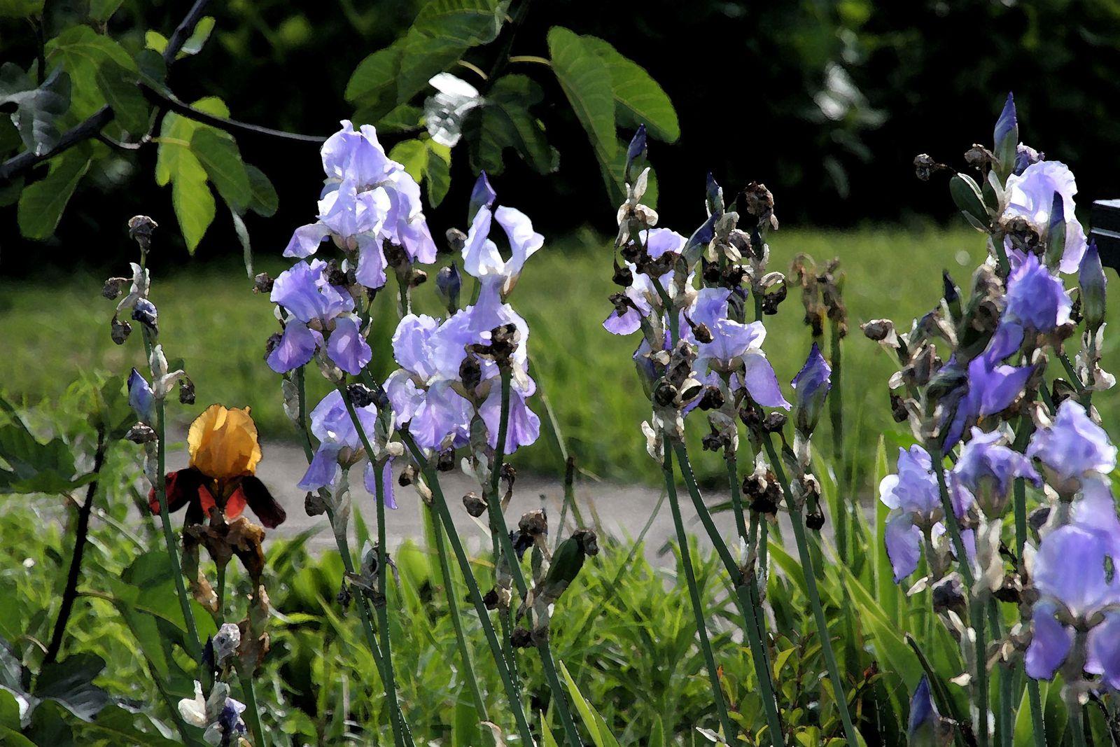 La fleur des poètes