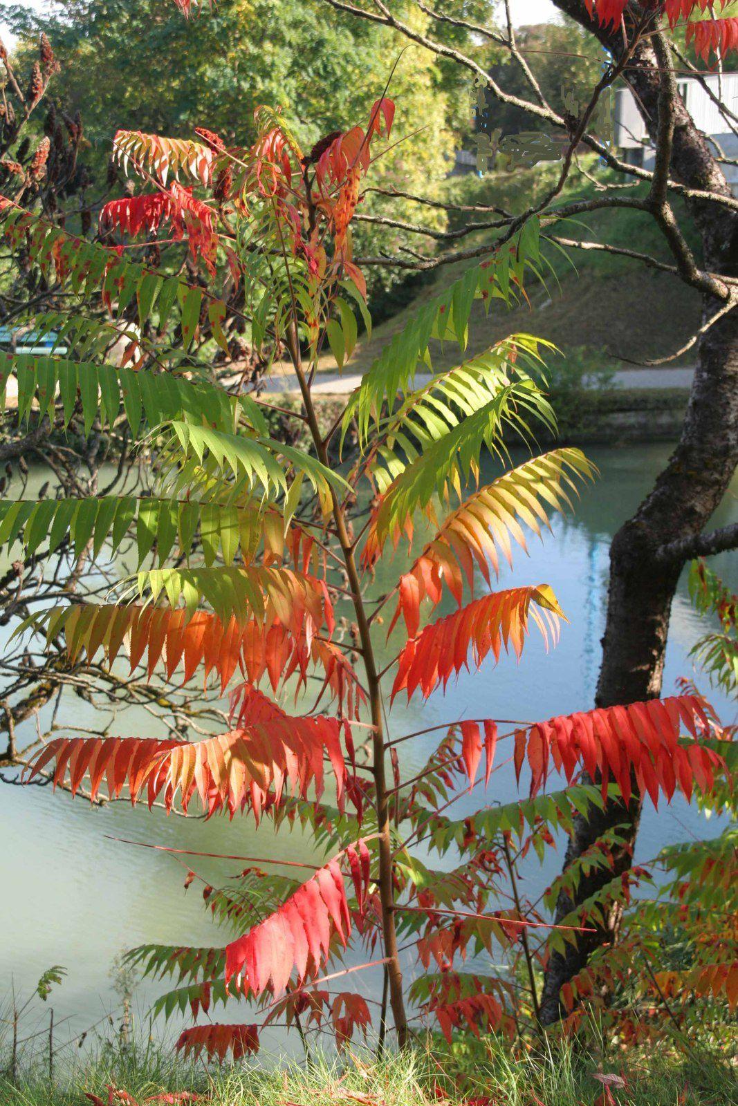 Flamboyante automne