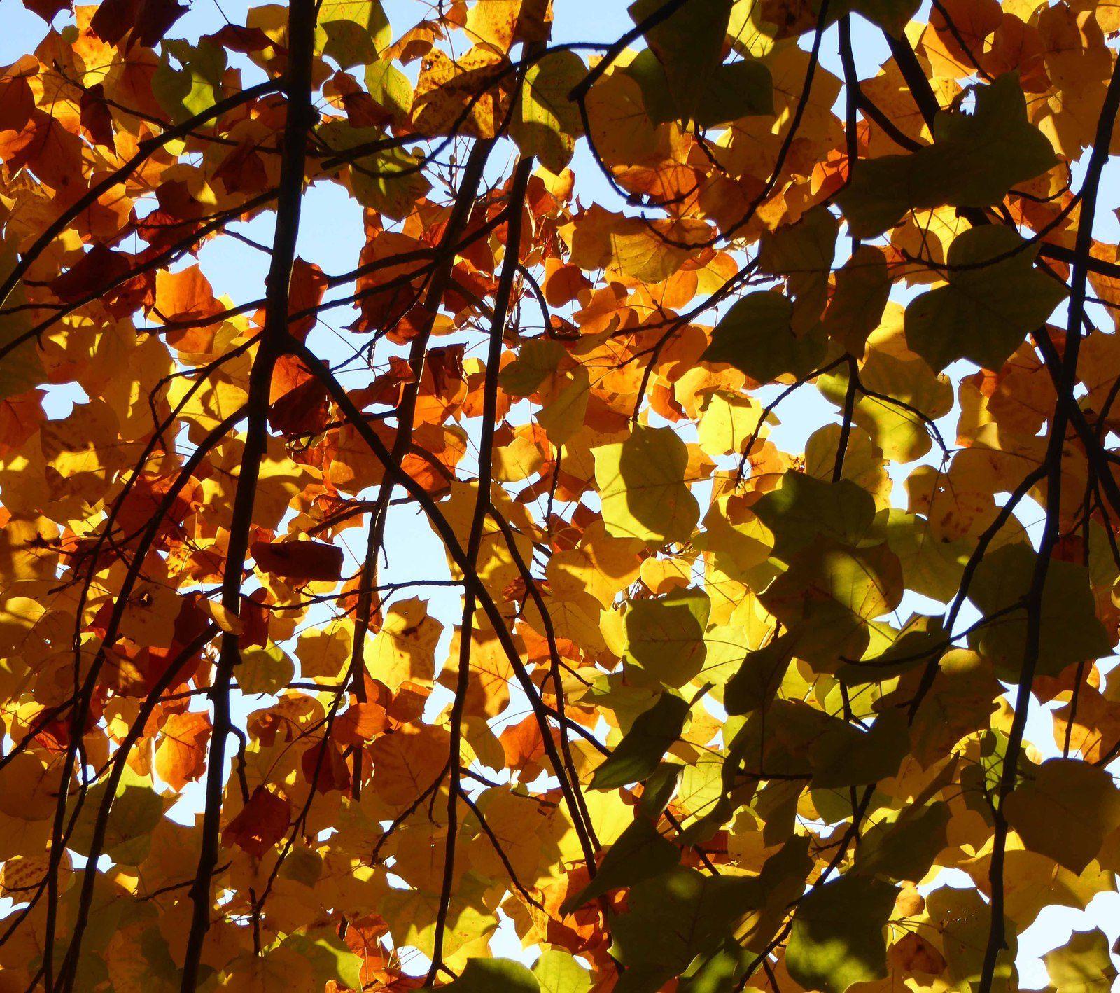 Petits bonheurs d'automne