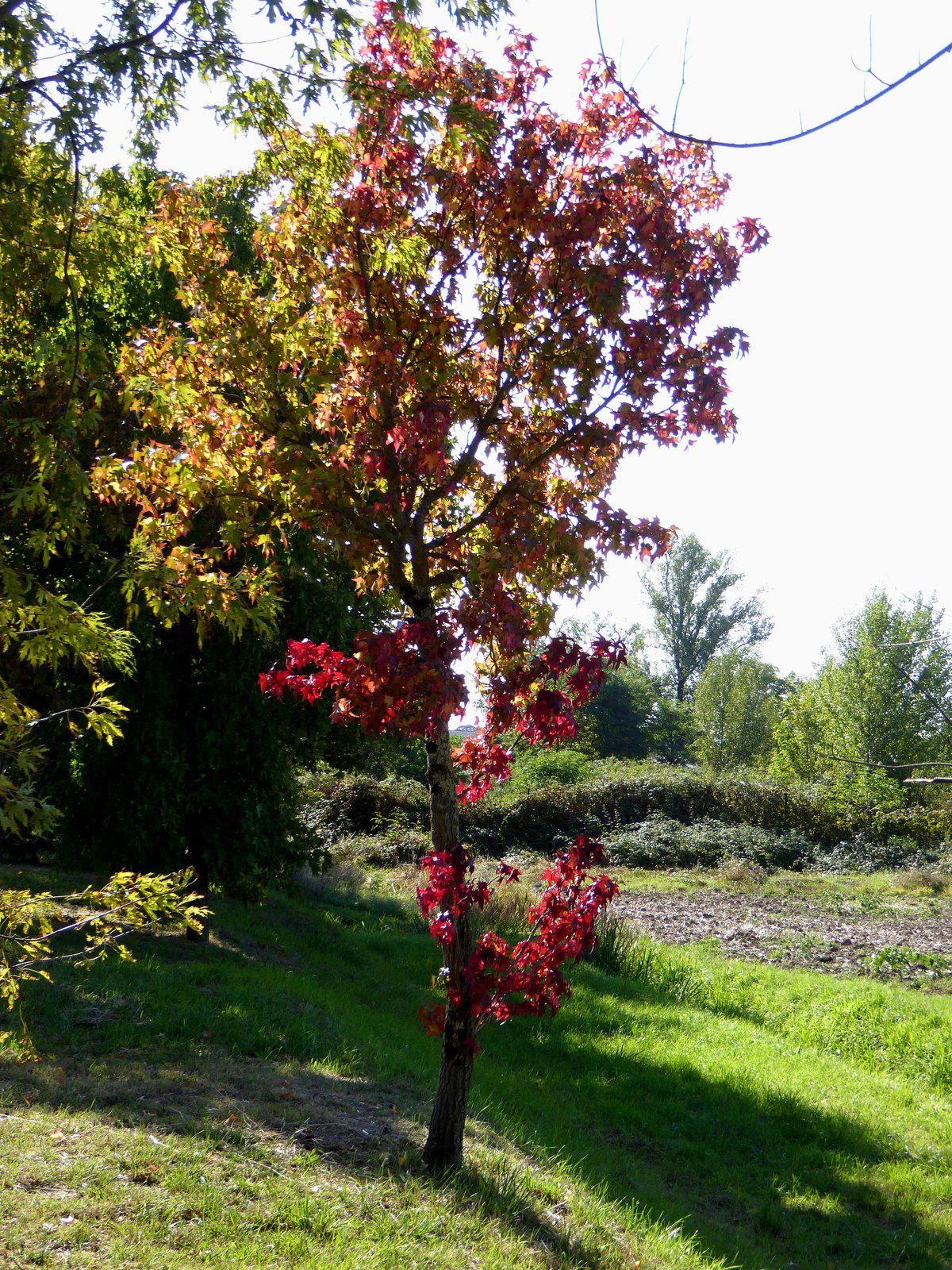 Bonjour l'automne!