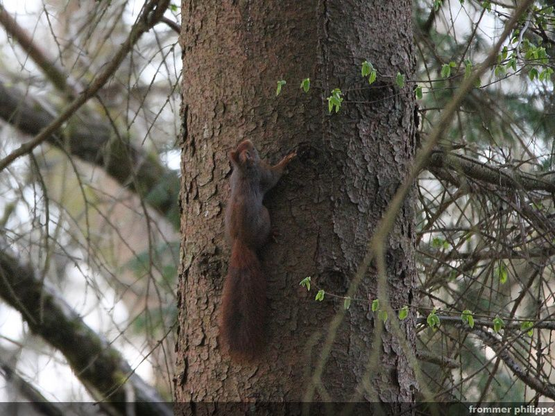 retour de l'écureuil