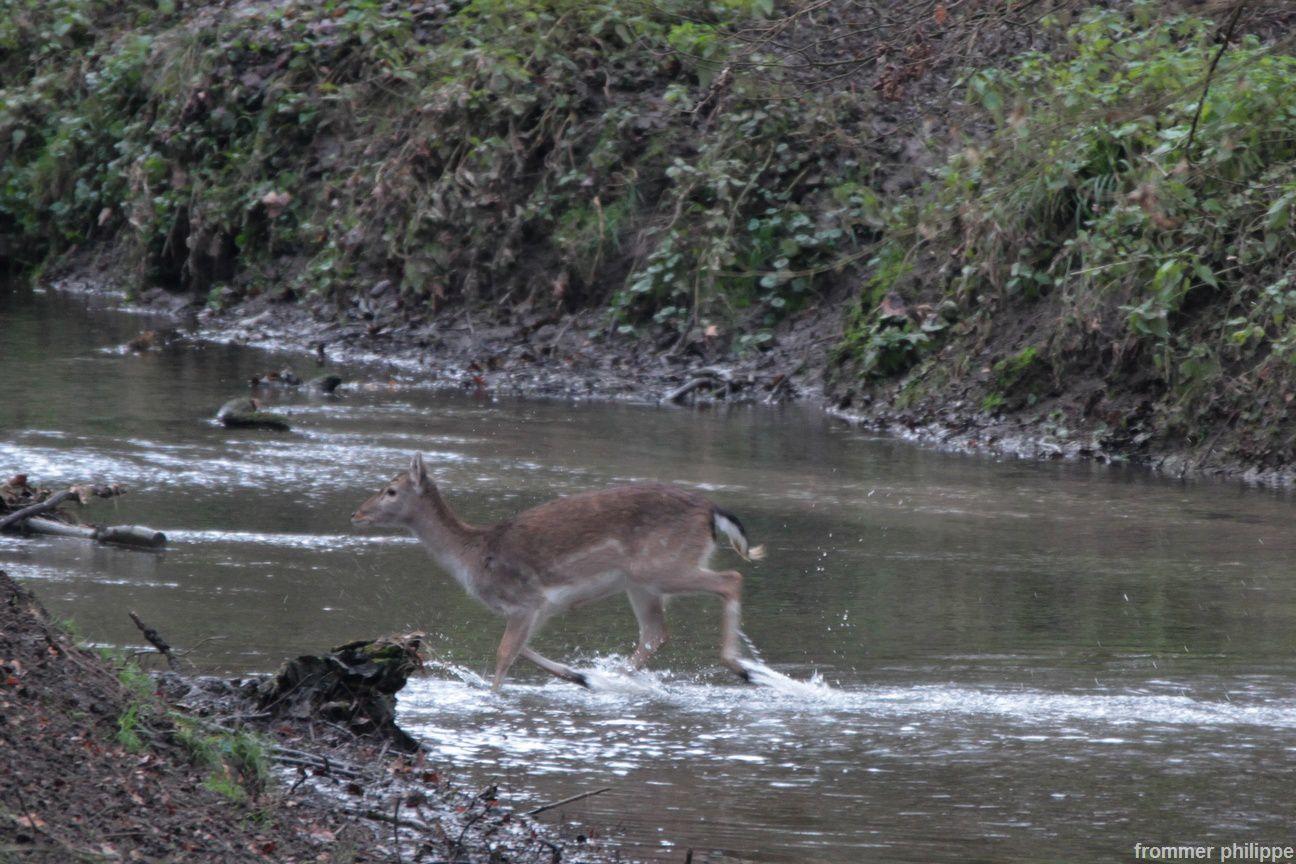 Traversée d'une rivière