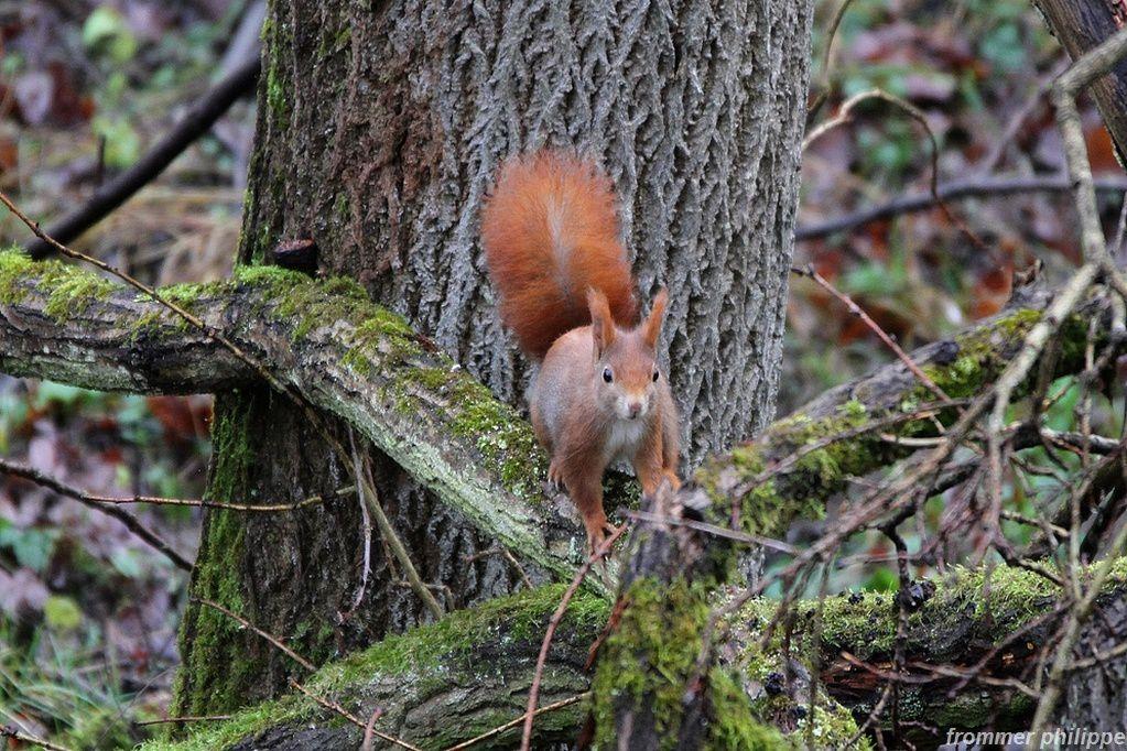 séquence photo avec l'écureuil cacahuète