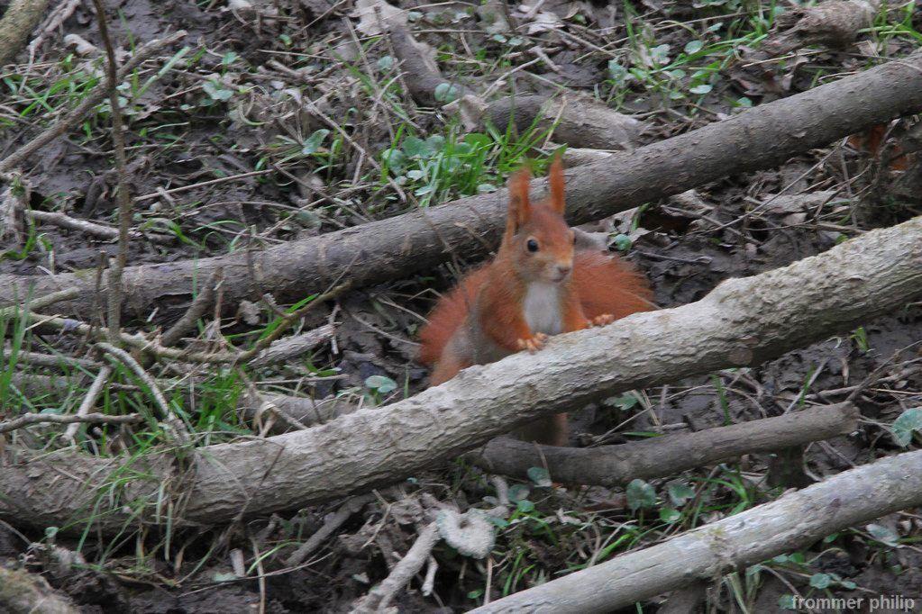 Le retour de l'écureuil cacahuète