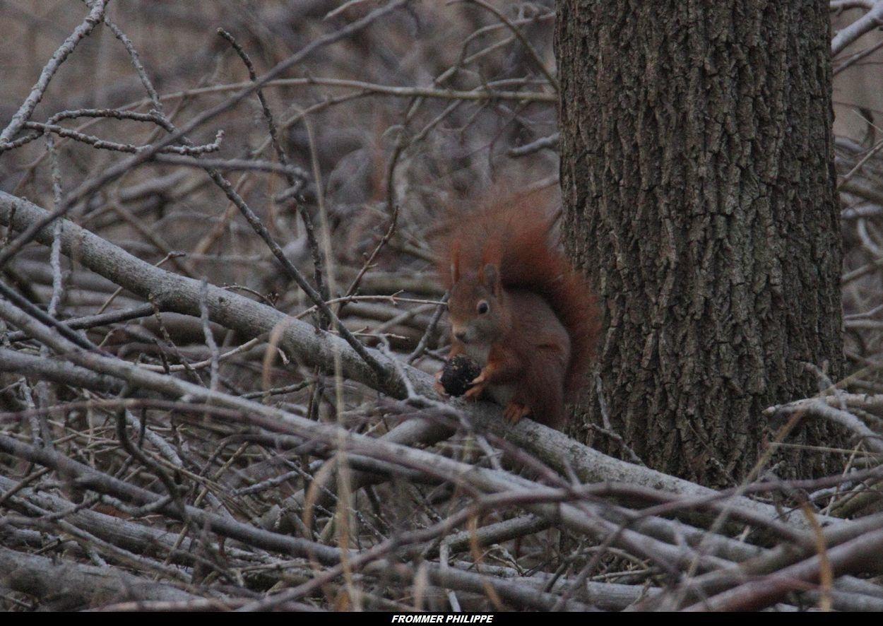 l'écureuil et sa cacahuette