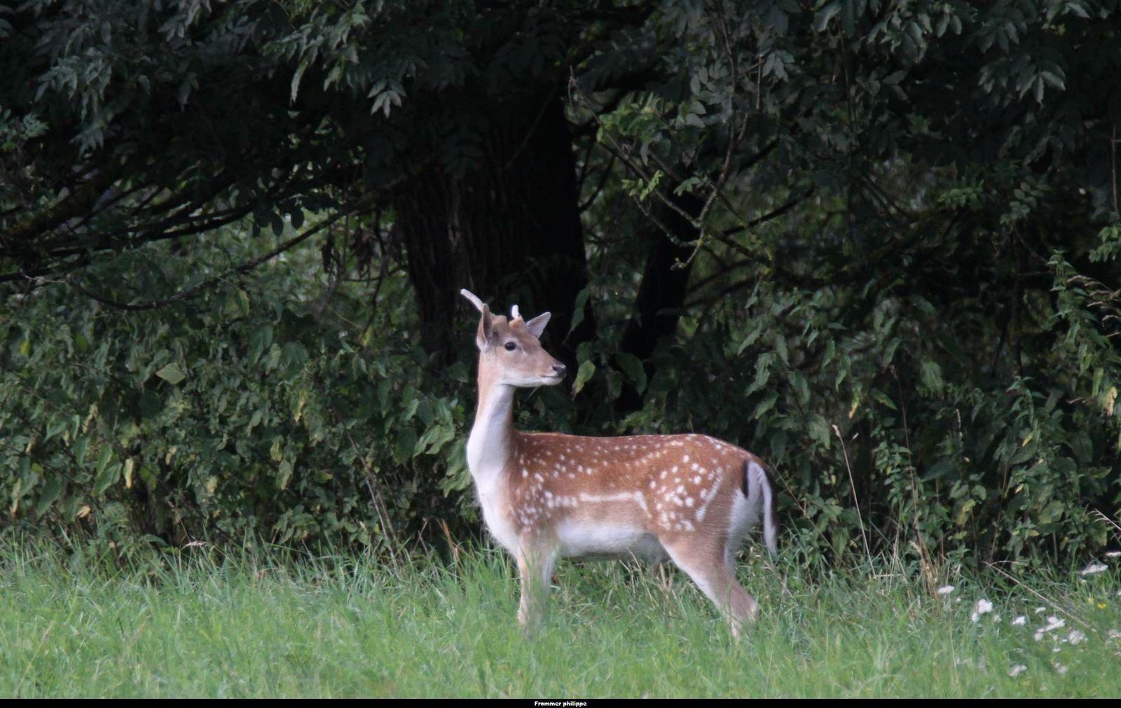 La réserve naturelle de l'Illwald à Sélestat on l'aime pour pour ça