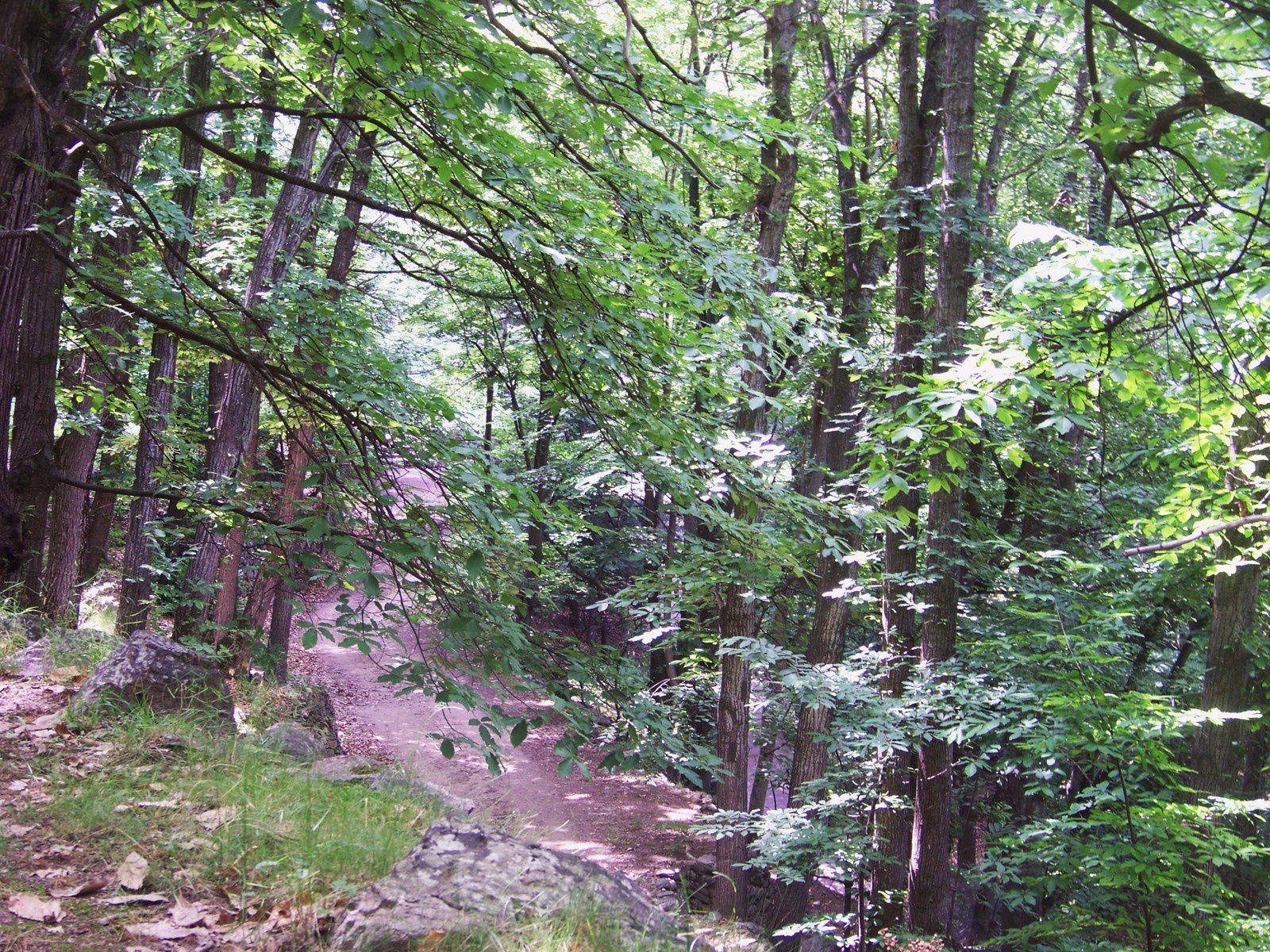 la montagne: la forêt, la vierge sur le chemin&#x3B; l'abbaye et ses dépendances&#x3B;dans l'abbaye une petite vierge toute seulette avec son ptiot, salut biquette