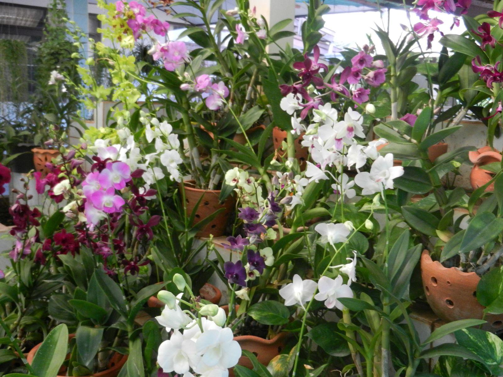 Ferme des Orchidées