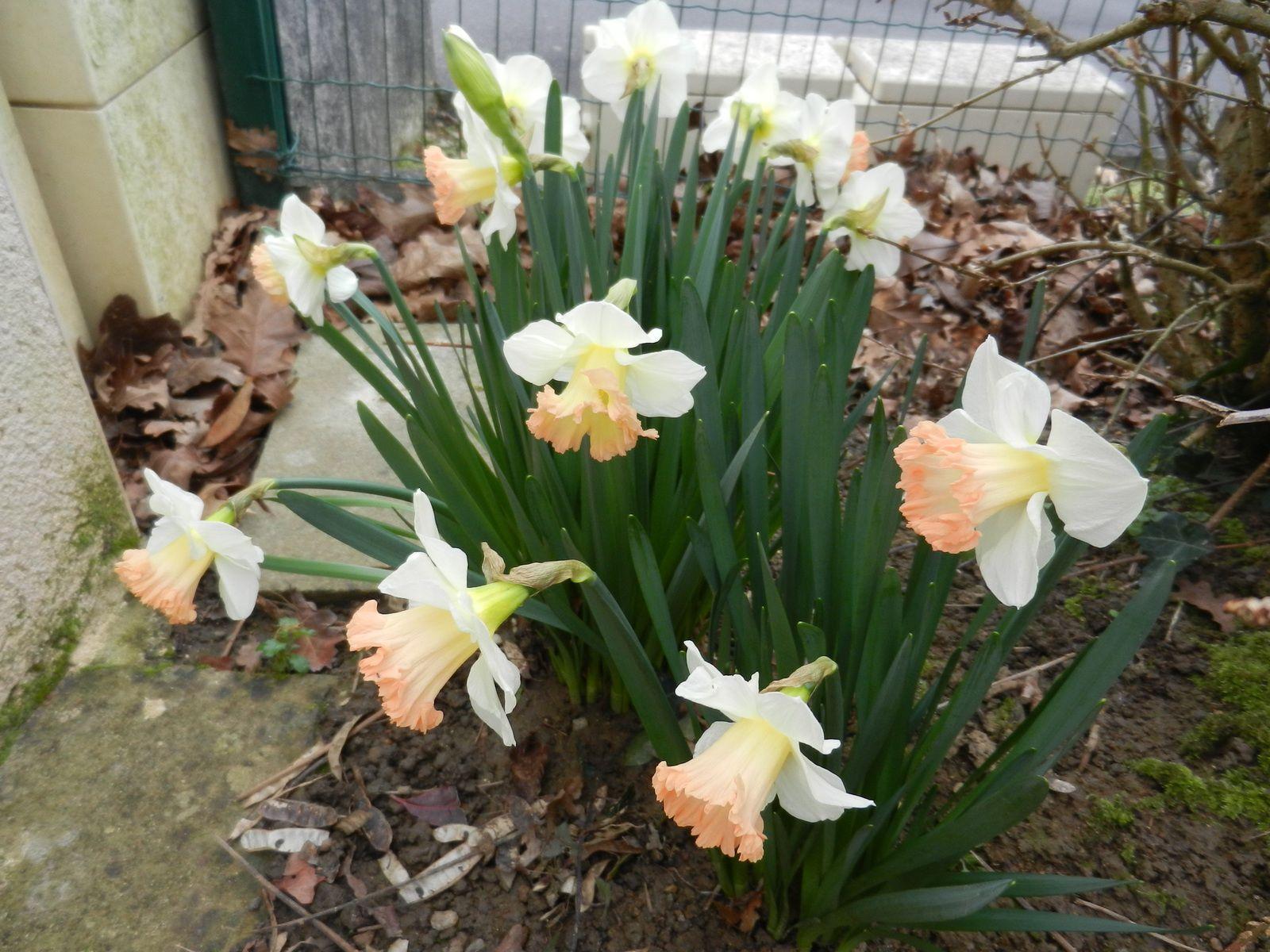 Les fleurs du jardin les aiguilles de josiane for Guide des fleurs du jardin