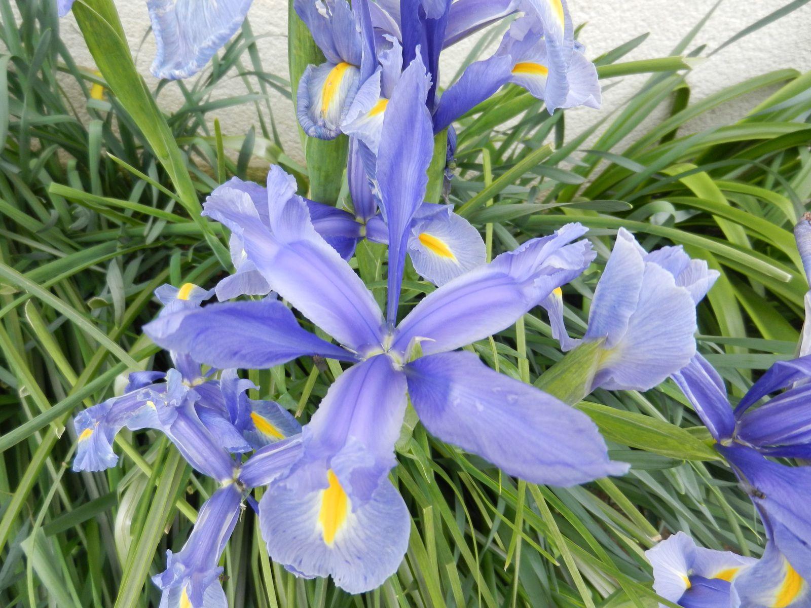 Les Fleurs Du Jardin Les Aiguilles De Josiane