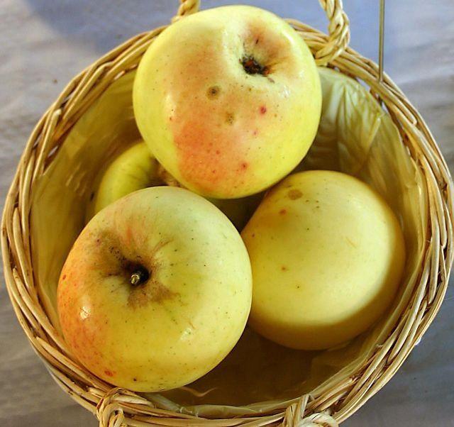 Concentration en nutriments : Une pomme de 1950 équivaut à 100 pommes d'aujourd'hui