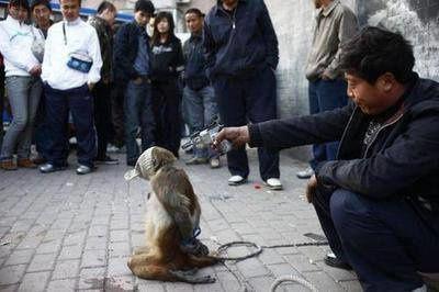 """On se demande qui est le """"singe"""" des deux ?"""