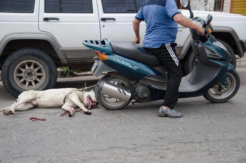 Le propriétaire de ce chien a traîné son chien derrière sa moto et après celui-ci a voulu le cacher, mais il s'est rendu compte qu'il avait été photographié et signalé à la police ! Cordoba - Argentine.