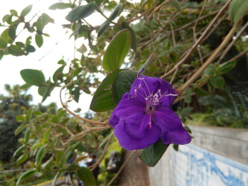 MADERE : balade au jardin tropical FUNCHAL