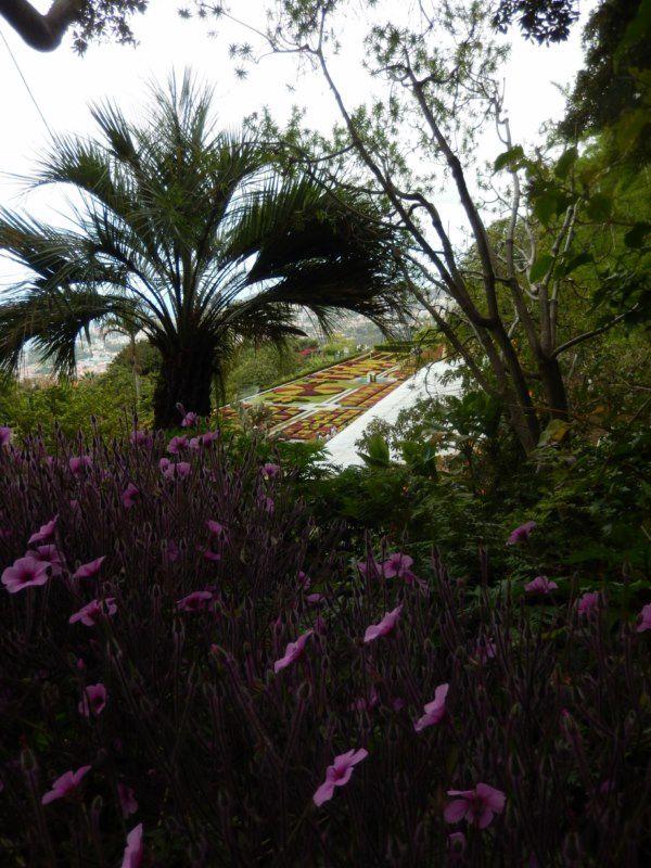 MADERE : balade au jardin botanique FUNCHAL