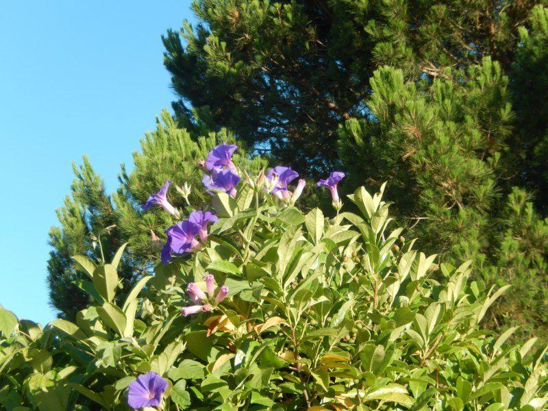 petite balade au jardin début juillet