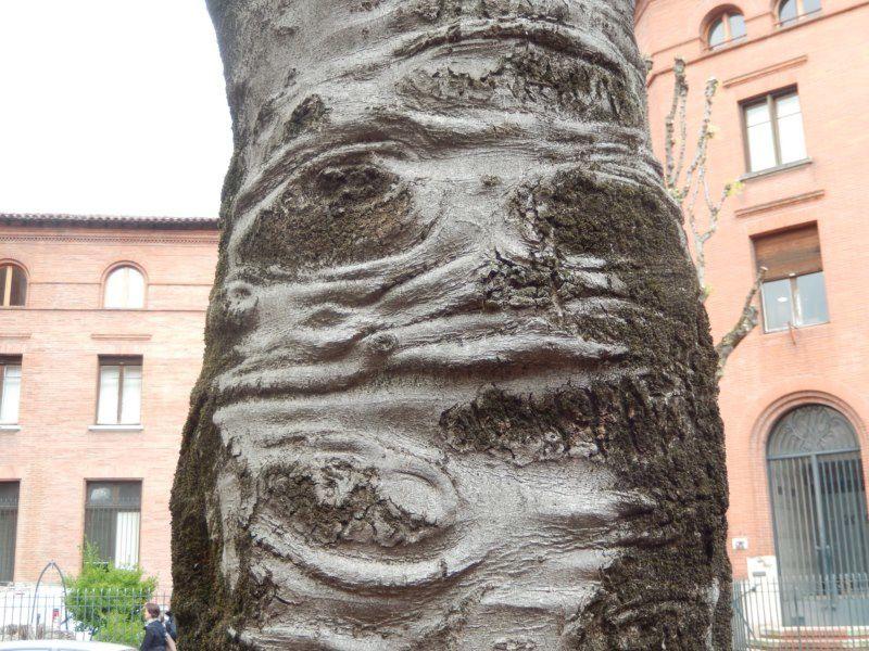bonhomme d'arbre