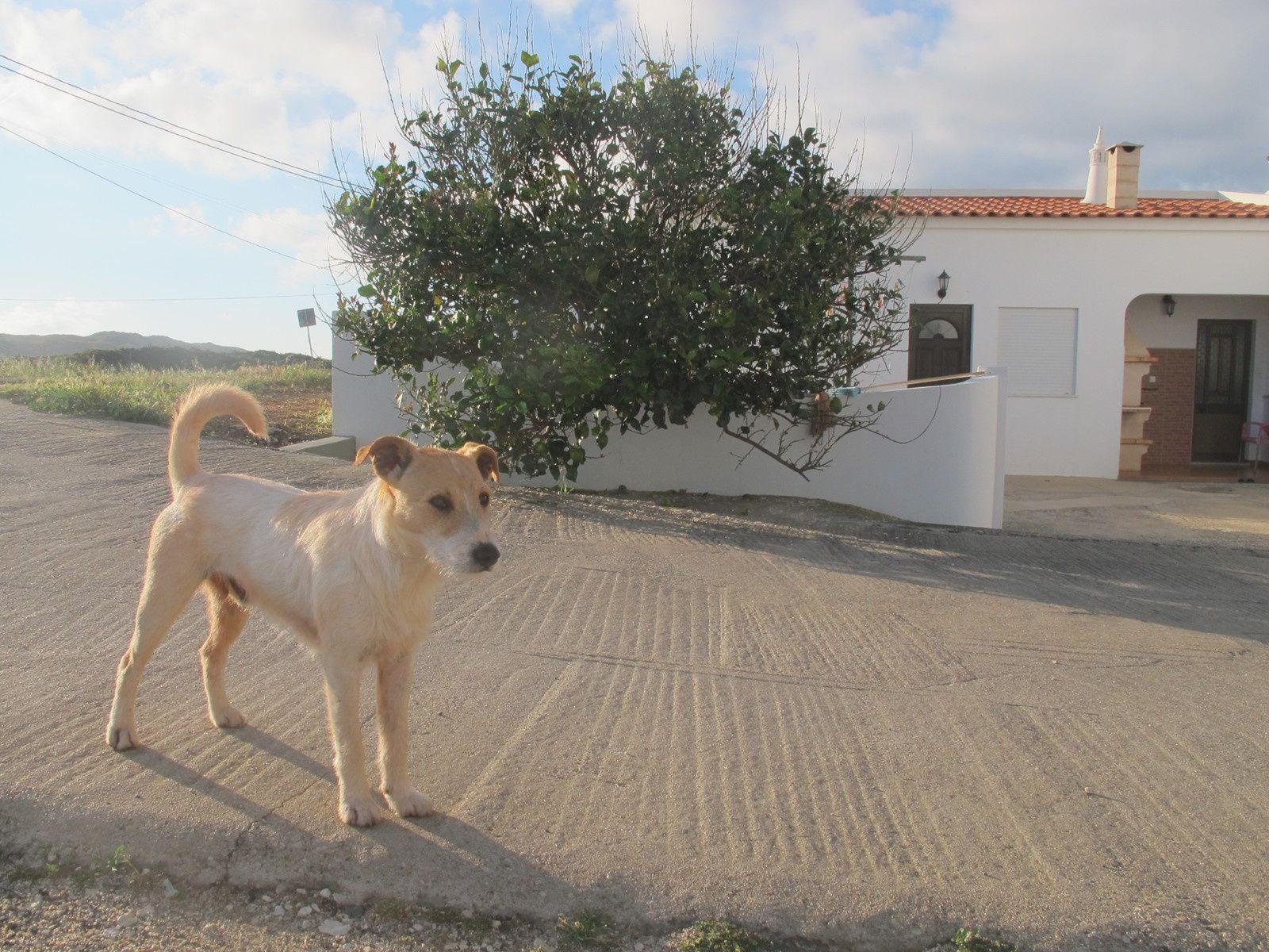 Autour de ma ptite maison portugaise