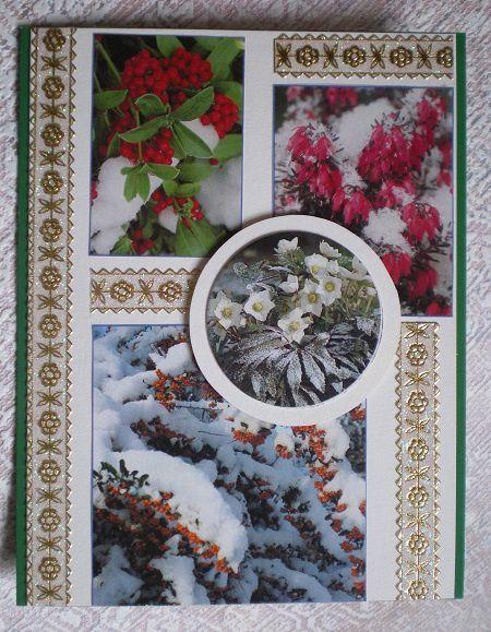 avec de petites images d'un catalogue de fleurs et plantes.