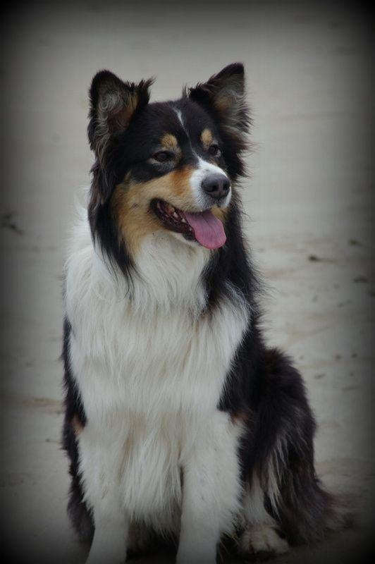 CJ de Marine et Patoune, eclipse et mon chien !