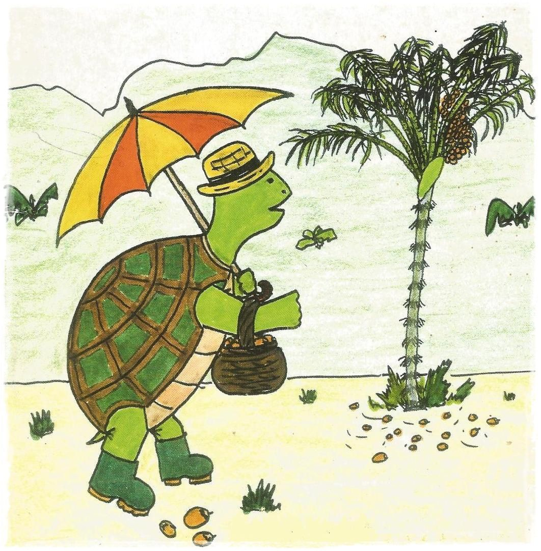Le bouillon d'awaras de Toti la tortue.