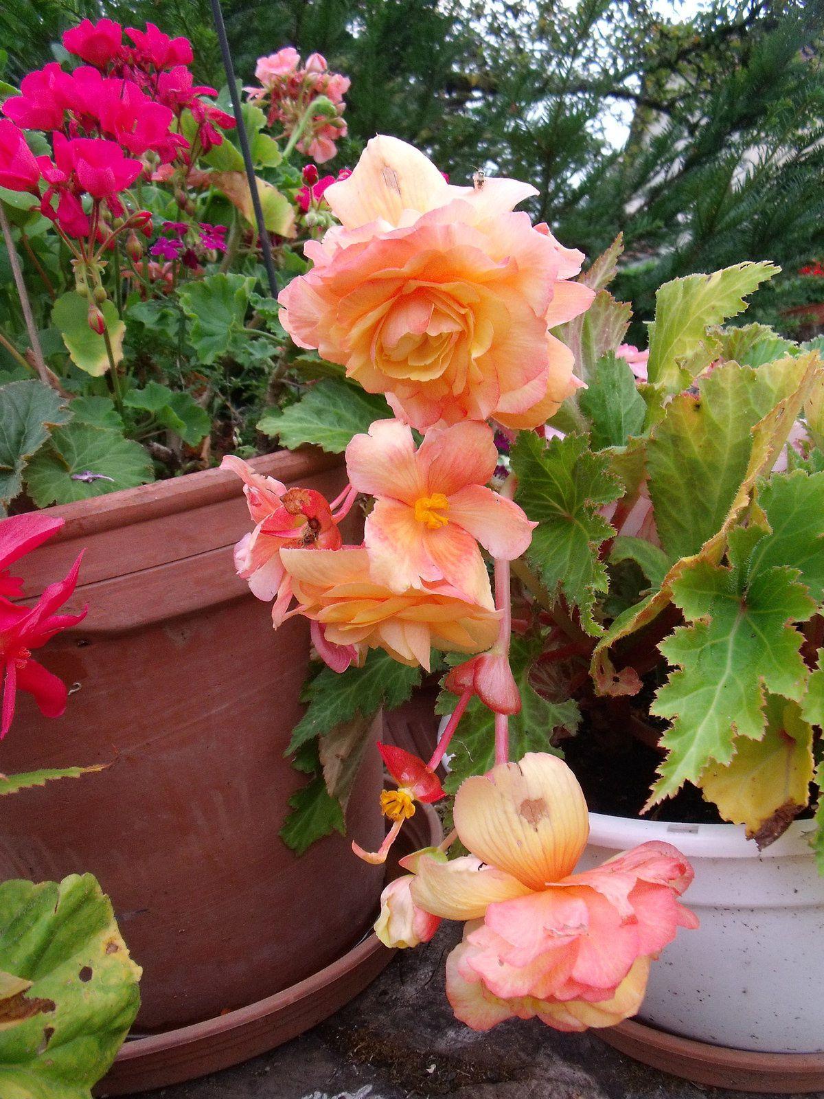 Après quelques orages, les fleurs reprennent vie