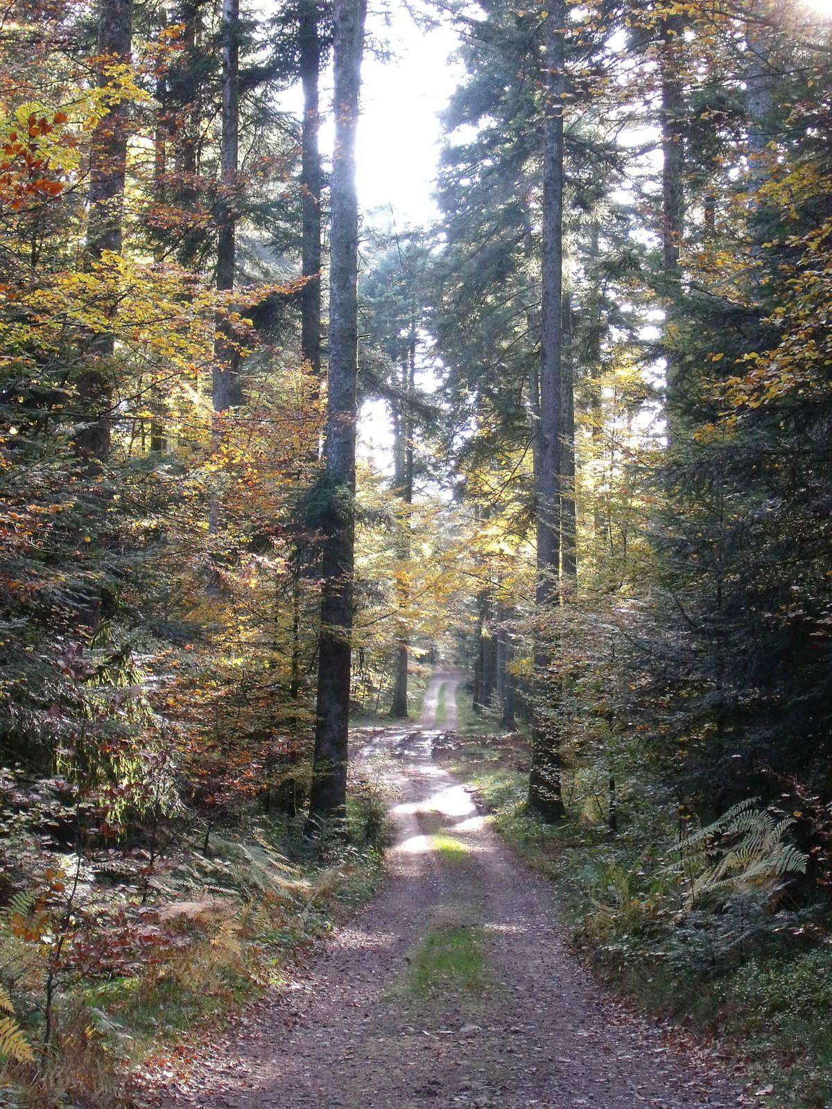 Forêt....