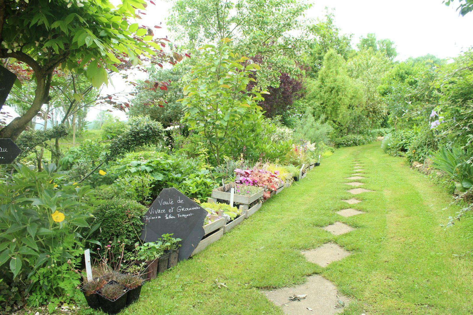 hissez les couleurs le jardin des violettes