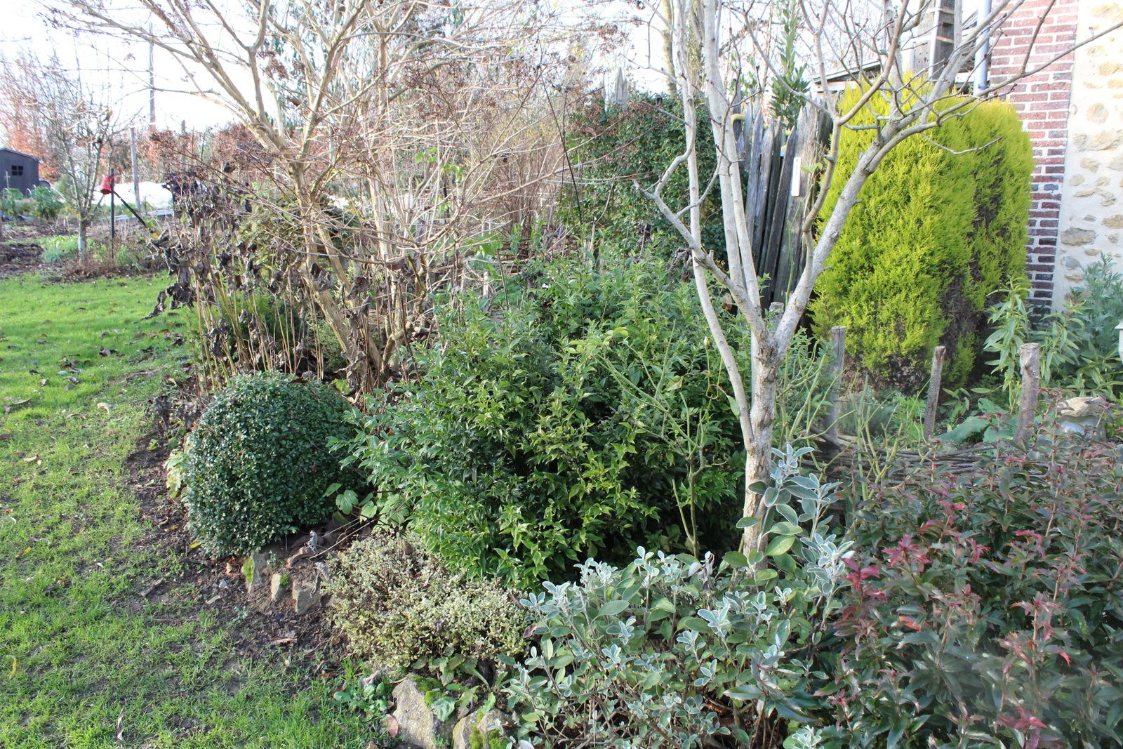 Couleurs d 39 hiver au jardin des violettes le jardin des for Beau jardin en hiver