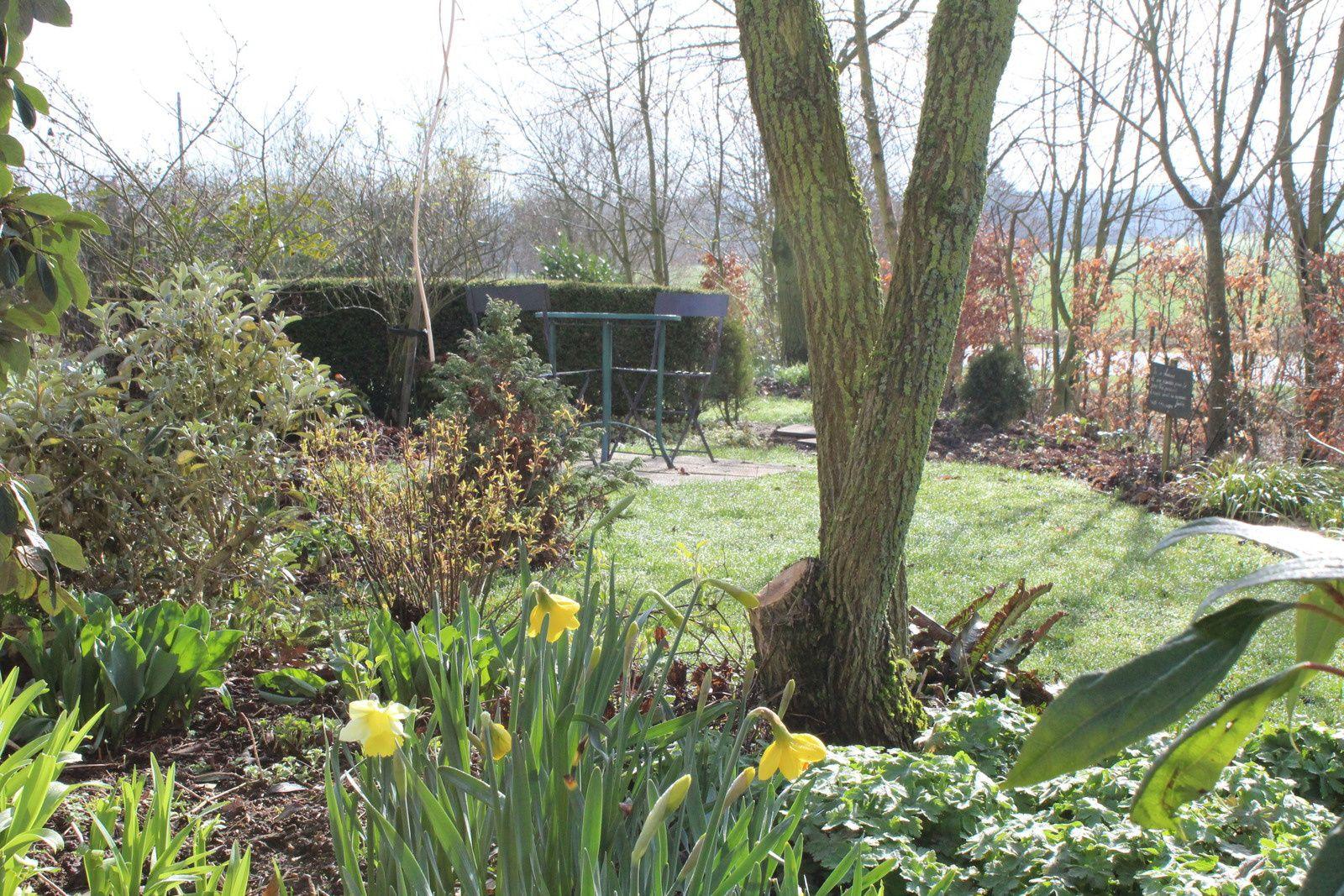 Des envies, des idées, des nouveautés dans le jardin cet hiver on s'est fait grand plaisir . Ouverture de la chambre aux violettes pour un passage plaisir du chemin du portillon vers la source.