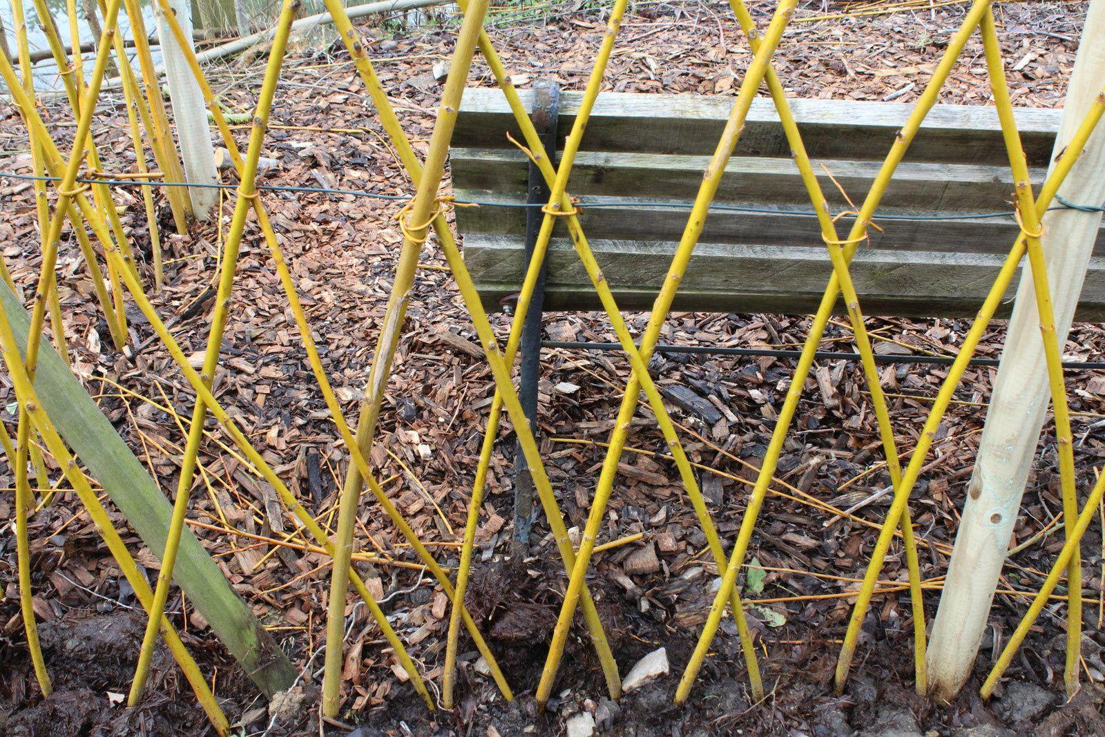 on a bien travaillé les saules et utiliser les branches orange pour un plessis derrière le banc de la source . et des retenues pour les népétas ...à suivre, mais déjà c'est un ajout de couleurs dans le jardin .j'aime !