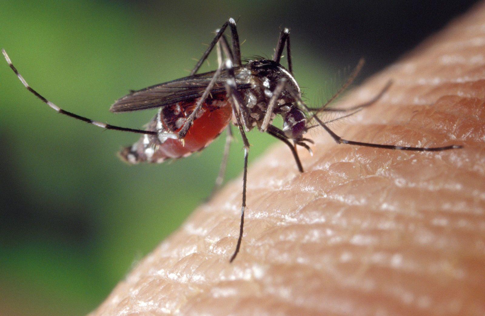 Prévention de la prolifération du moustique tigre